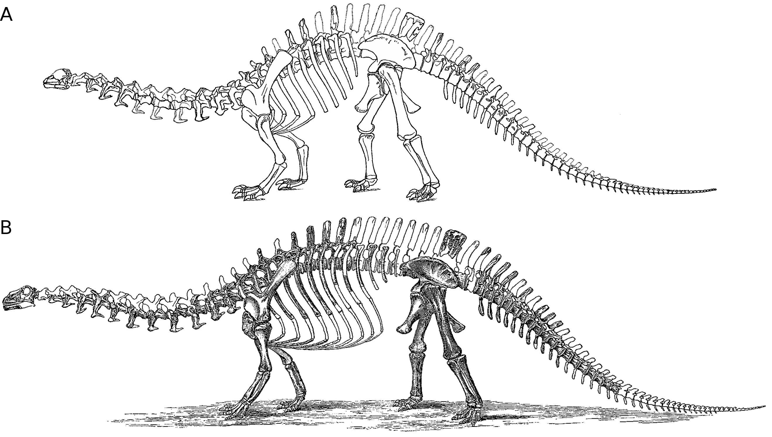 Supplementary Information On Sauropod